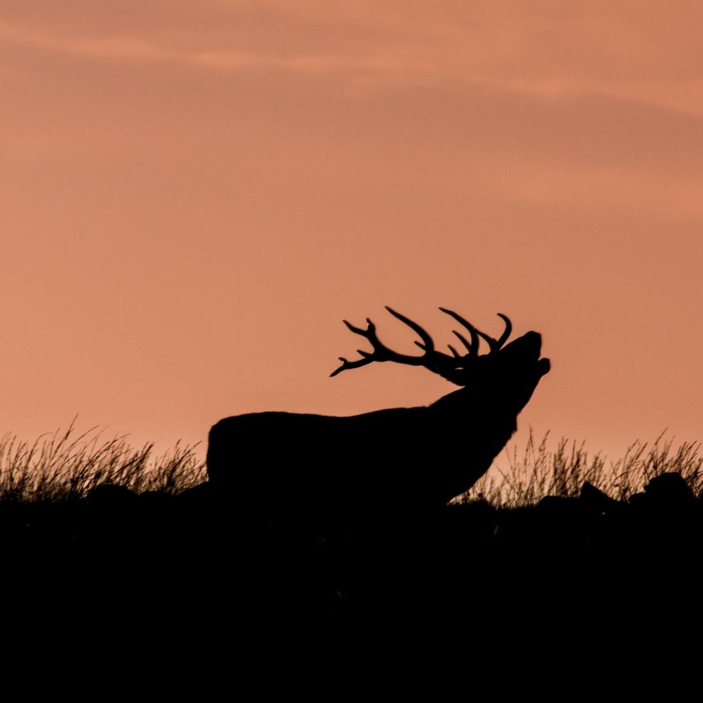 Big Moor Deer Walk