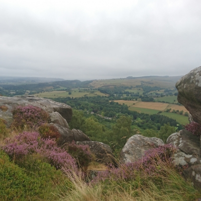 Purple heather with grit stone outcrops looking over the valley from Froggart
