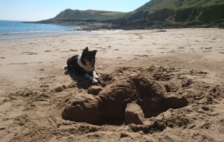Border collie and sand turtle sculpture on beach in Gower