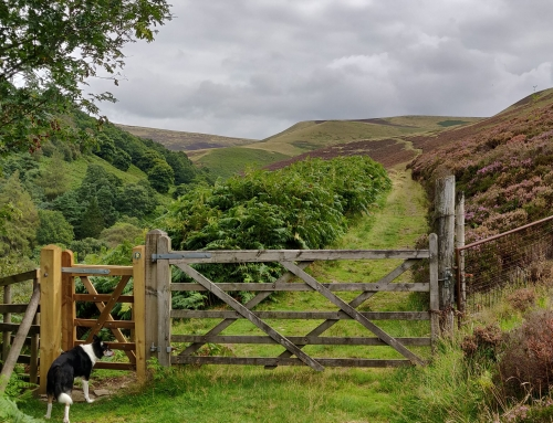 WildWays' first season – tours in the Peak District