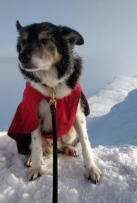 Lance Superdog braving the snow on Ben Vorlich