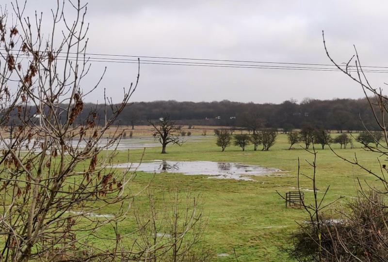 Flooded field with oak tree reflection